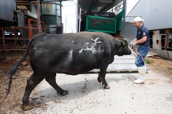 愛情に包まれた近江亀井牛