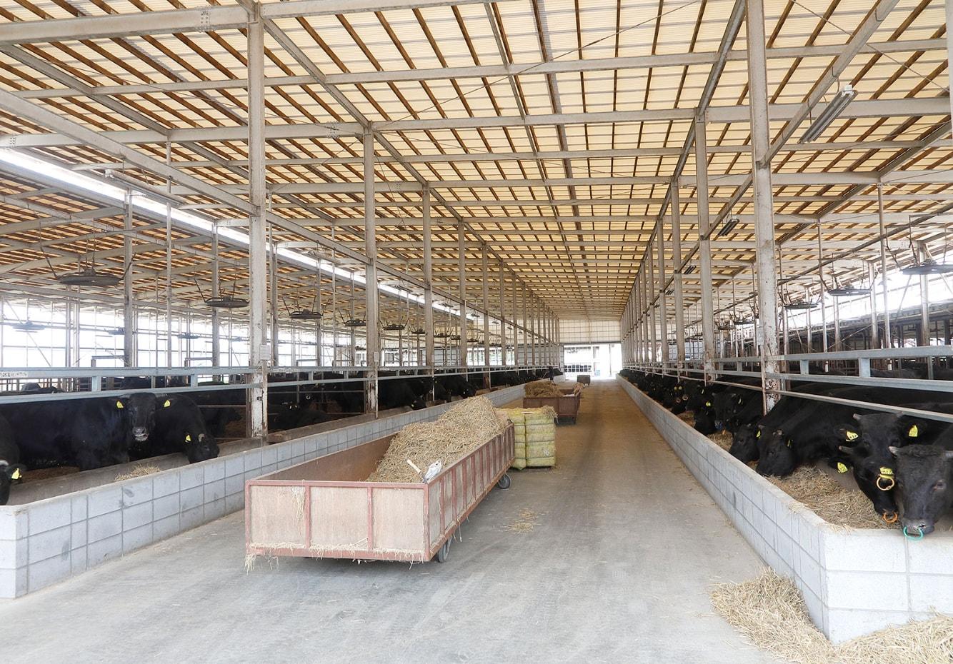 近江亀井牛の牛舎