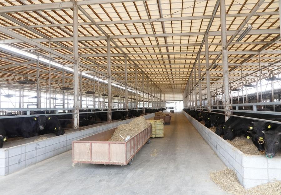 近江牛肥育牧場 まる亀こうし牧場の様子